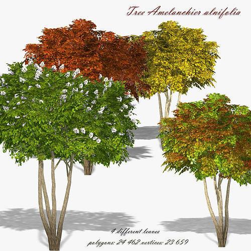 Tree Shadberry Amelanchier alnifolia