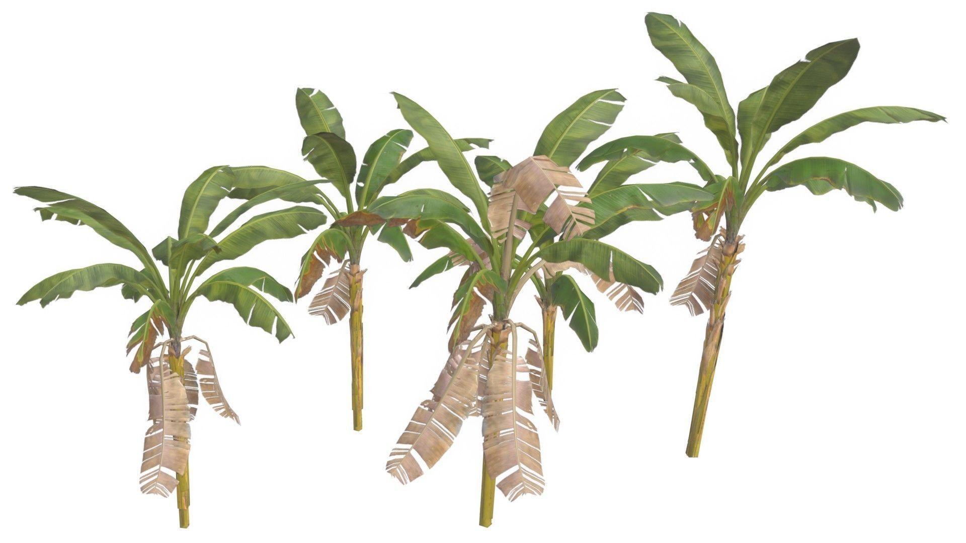 Banana Trees 02