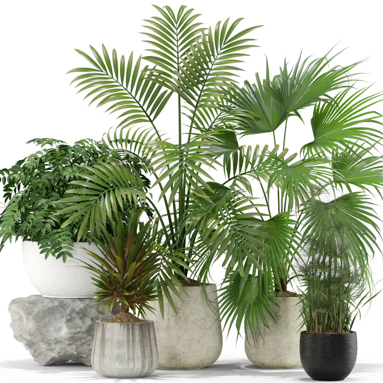Plants collection 353