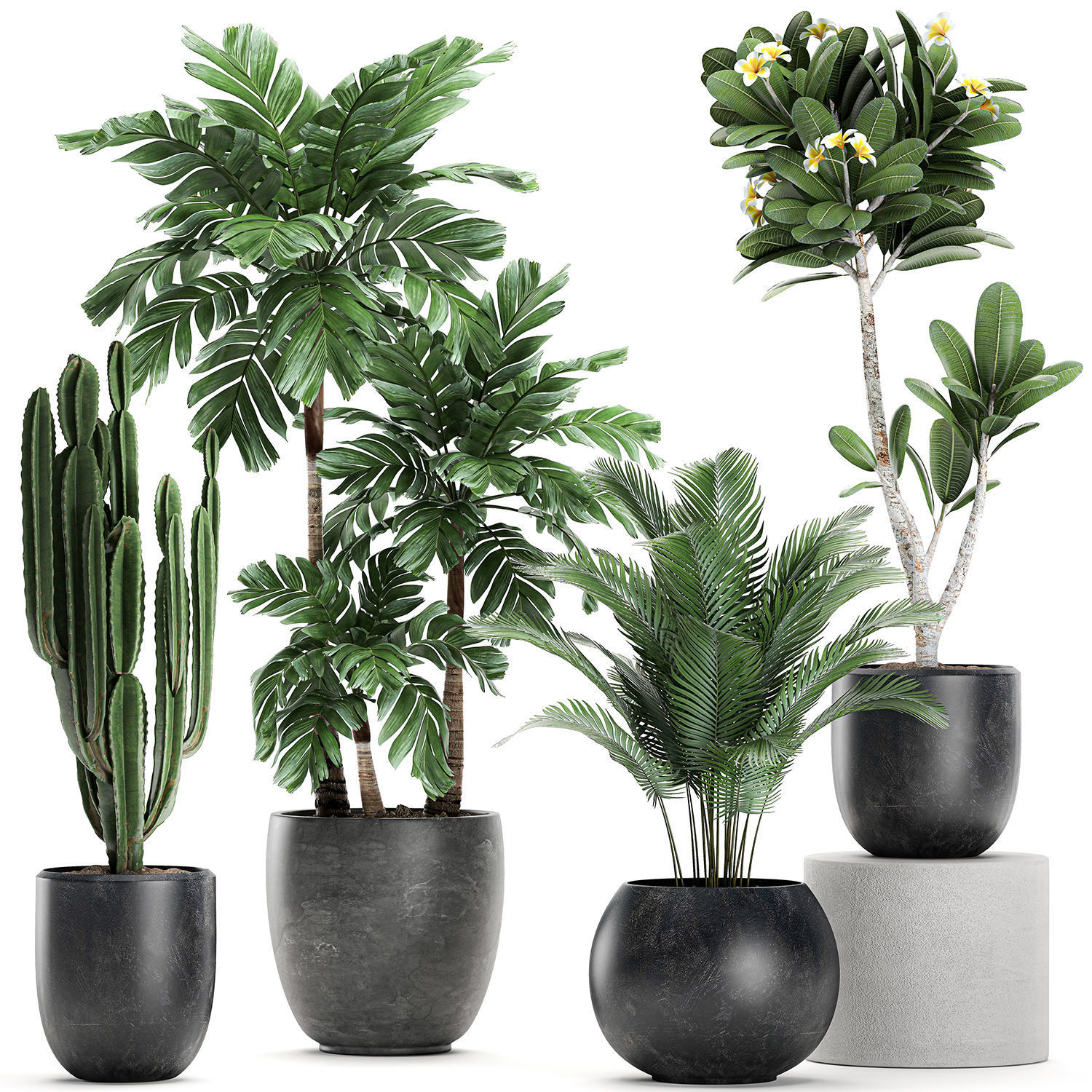 Plants in a black pot for the interior 677