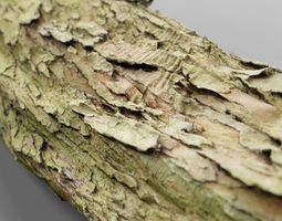 3d model game-ready photorealistic bark sample