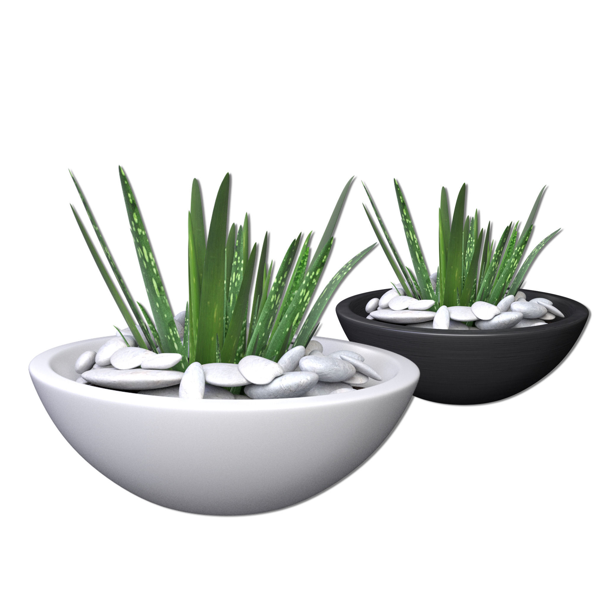 3d model aloe vera - potted plant 2 | cgtrader