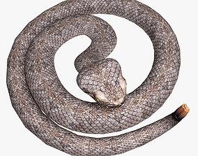 Rattlesnake 3D model