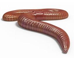 Worm pose 1 3D model