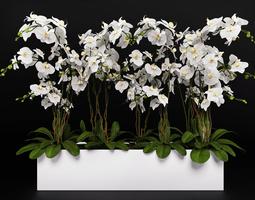 Orchid Arrangement 3 3D