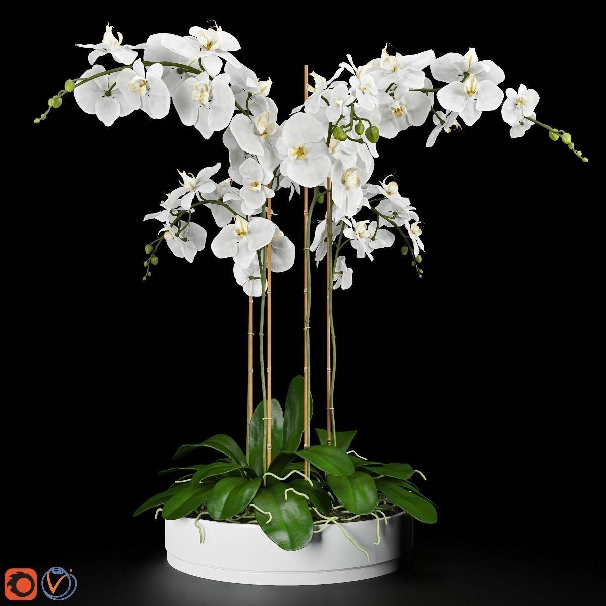 Orchid Arrangement 4