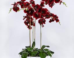 Orchid Arrangement 5 3D