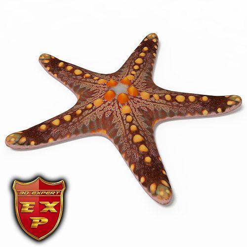 starfish 3d model max obj 3ds c4d mtl 1
