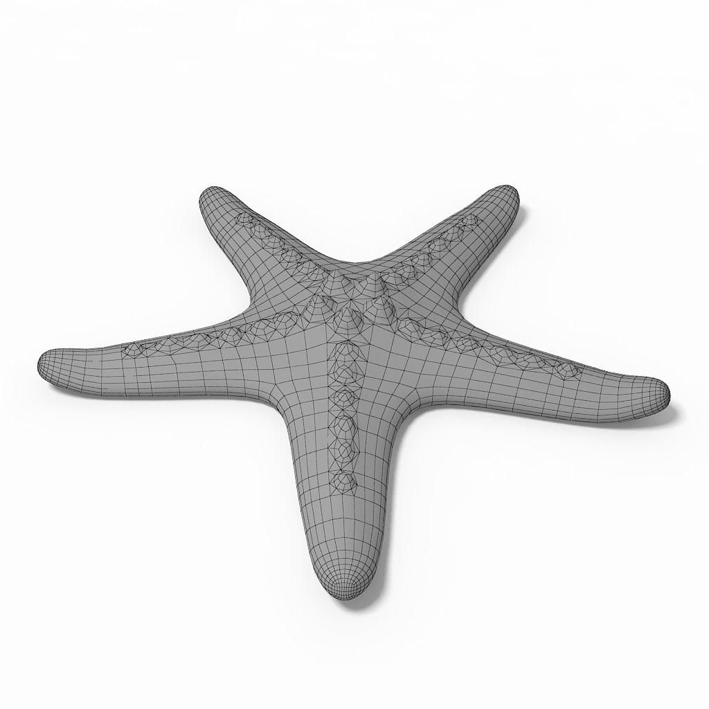 Starfish 3D Model MAX ...