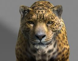 3d animated leopard a