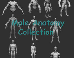 male anatomy collection 3d model obj fbx ztl