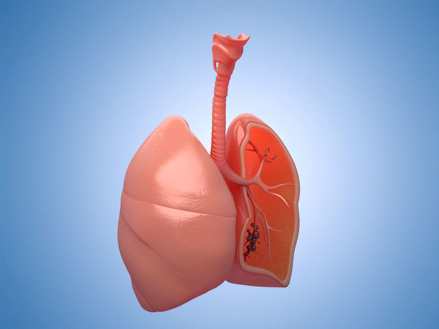 Medicine  human lungs  organs anatomy respiratory system