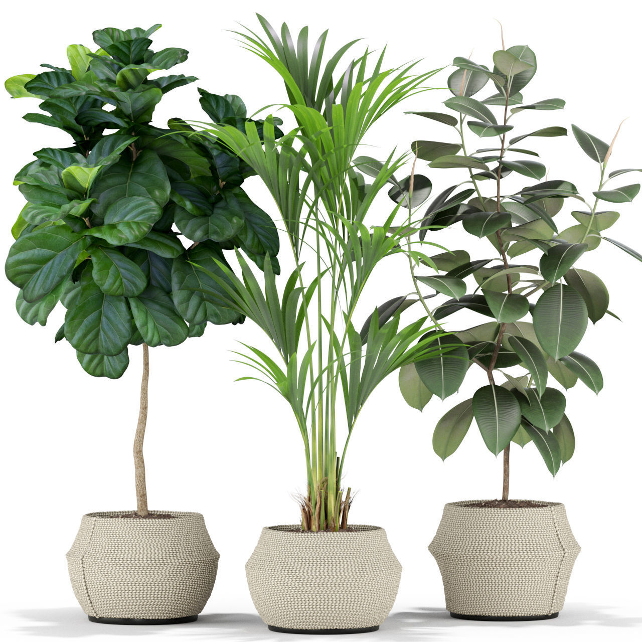 Plants collection 364