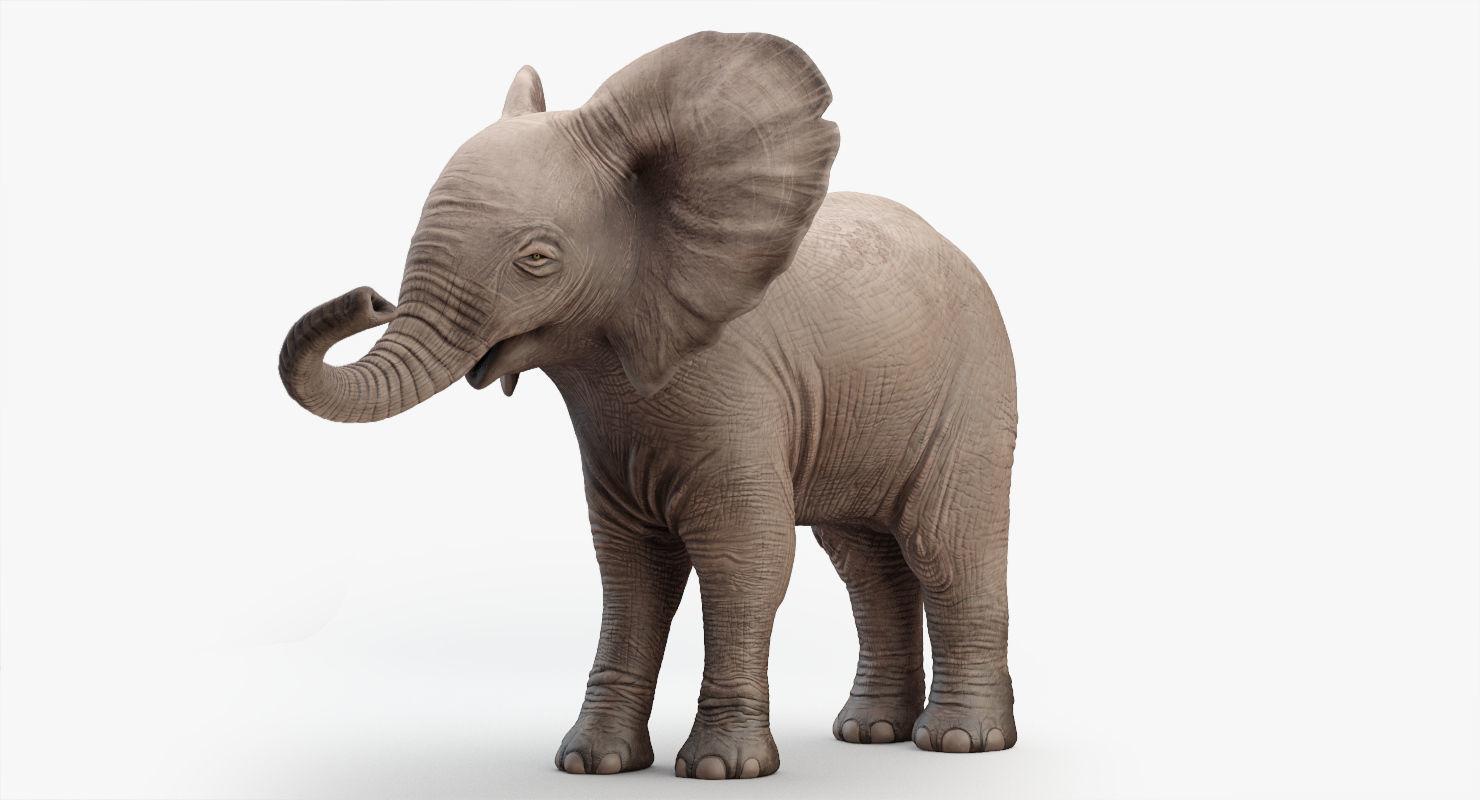 Animated Elephant  baby 8K