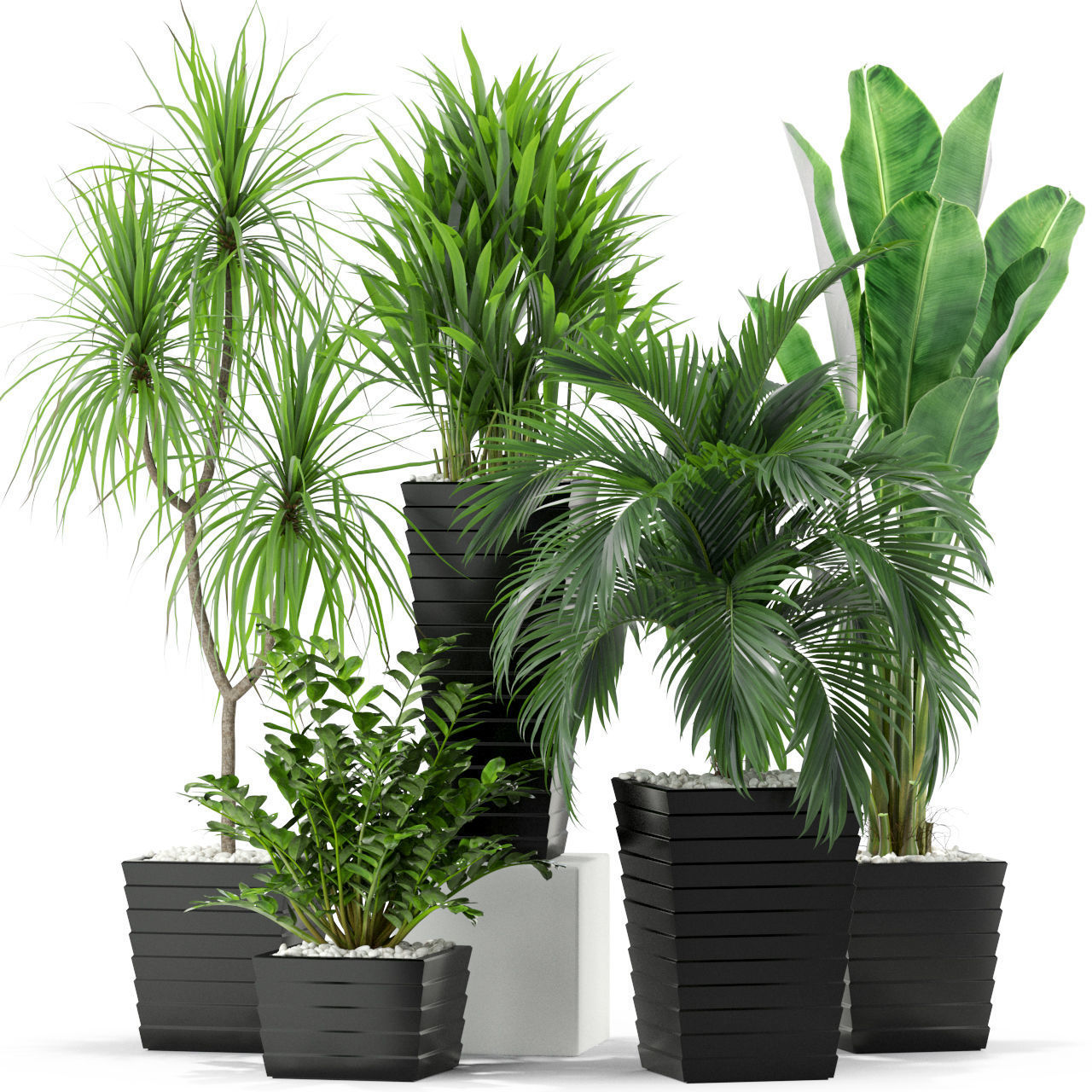 Plants collection 371