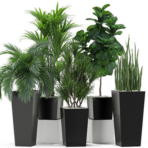 Plants collection 373