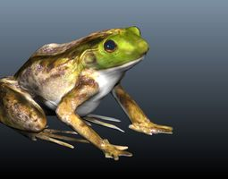 3D slimy green frog