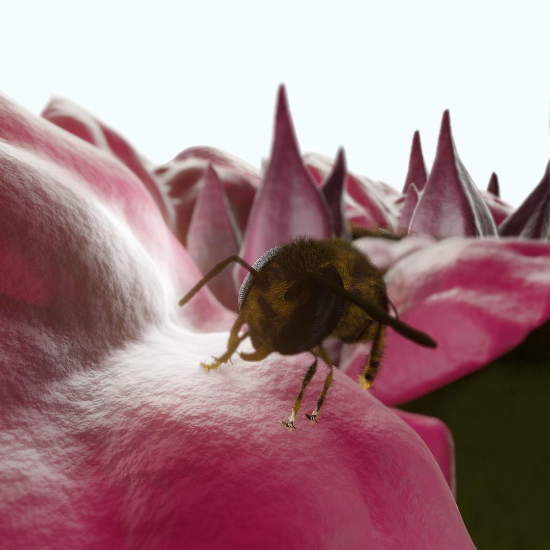 Bouganville flower with hornet