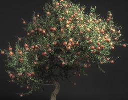 3D Pirus Malus Apple Tree