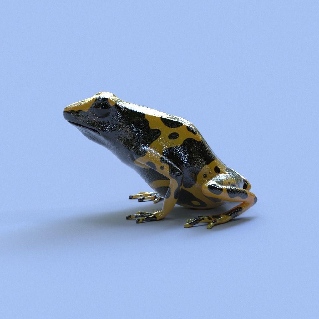Bumblebee Poison Dart Frog V2