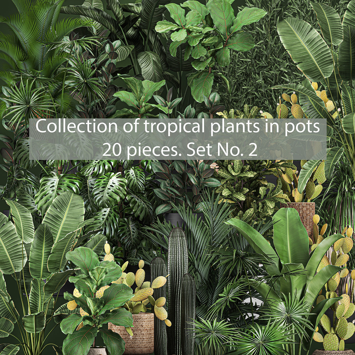 Collection of potted plants for the interior of 20 pieces set 2