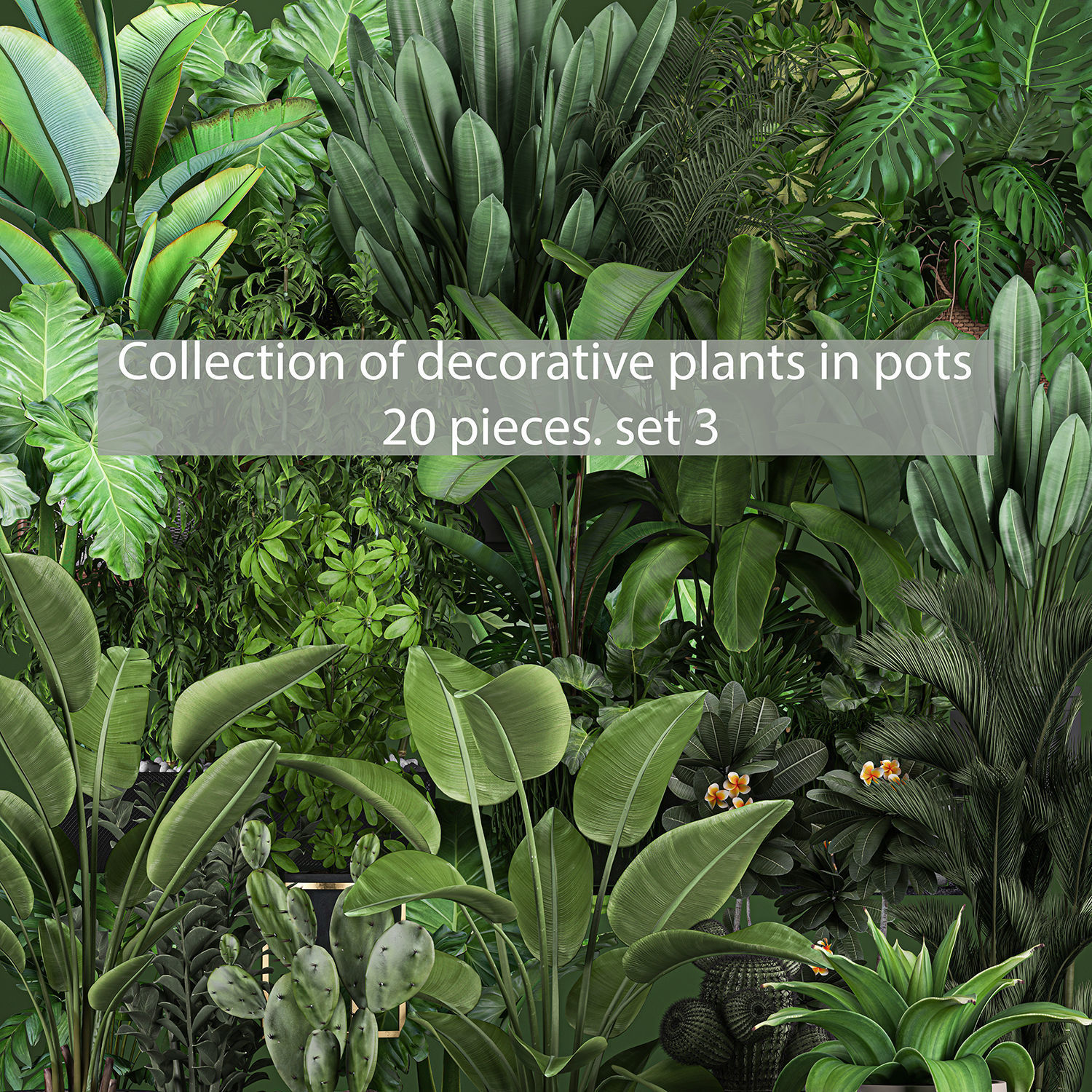 Collection of plants of 20 pieces SET 3 NEW