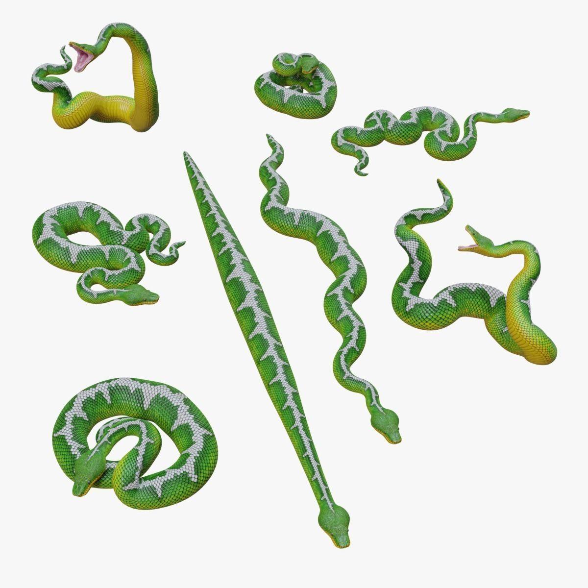 Emerald Tree Boa - 3D Mesh