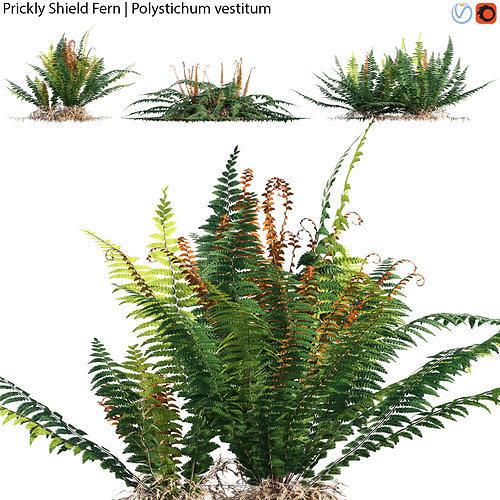 Prickly Shield Fern - Polystichum vestitum - 02