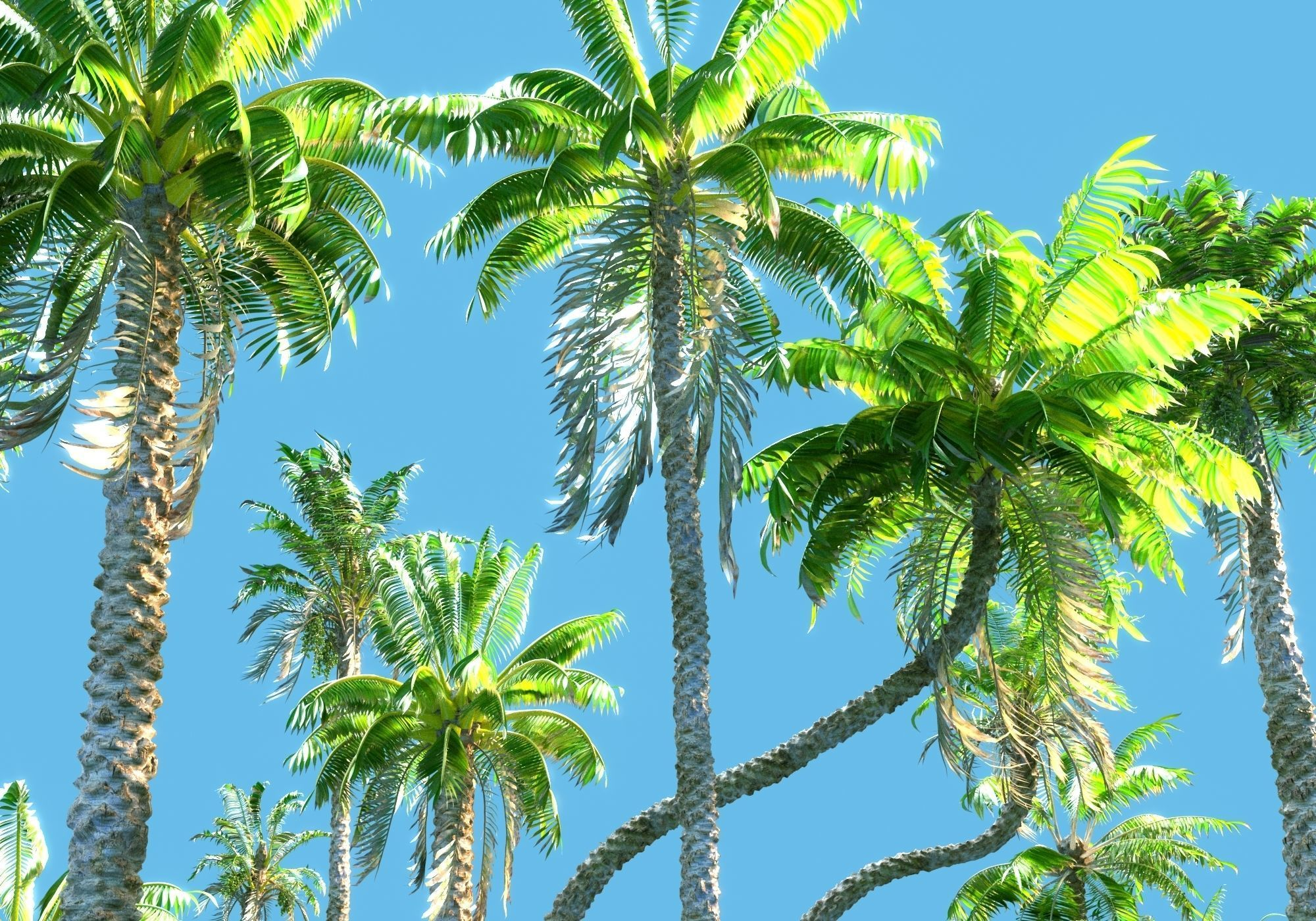 Animated Palm Trees