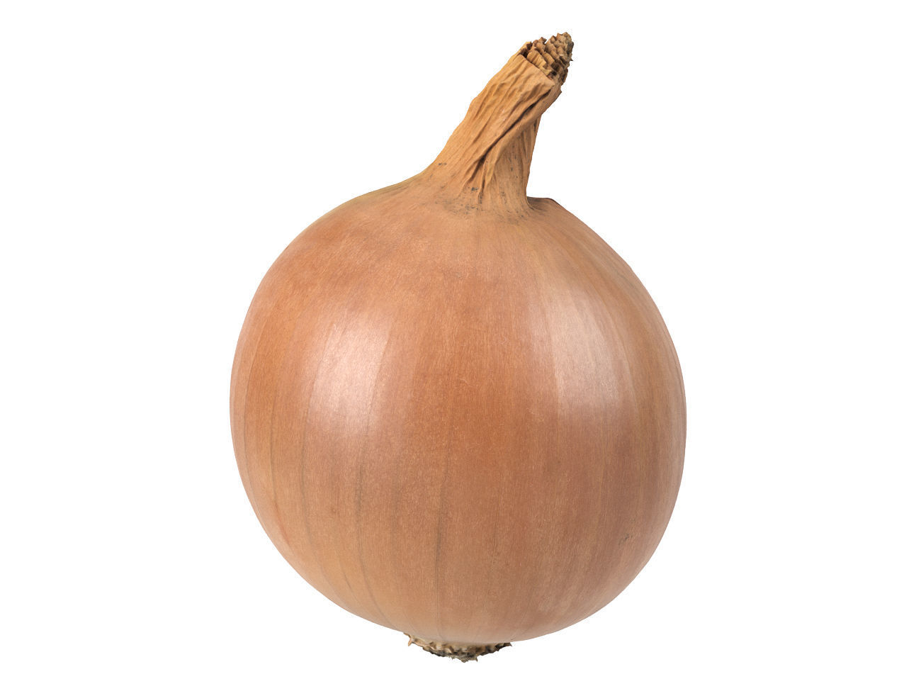 Photorealistic Onion 3D Scan