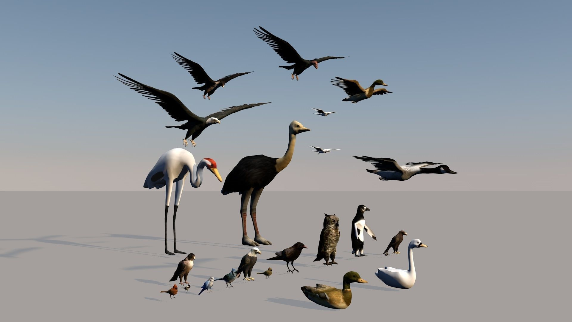 Game ready Low Poly bird collection