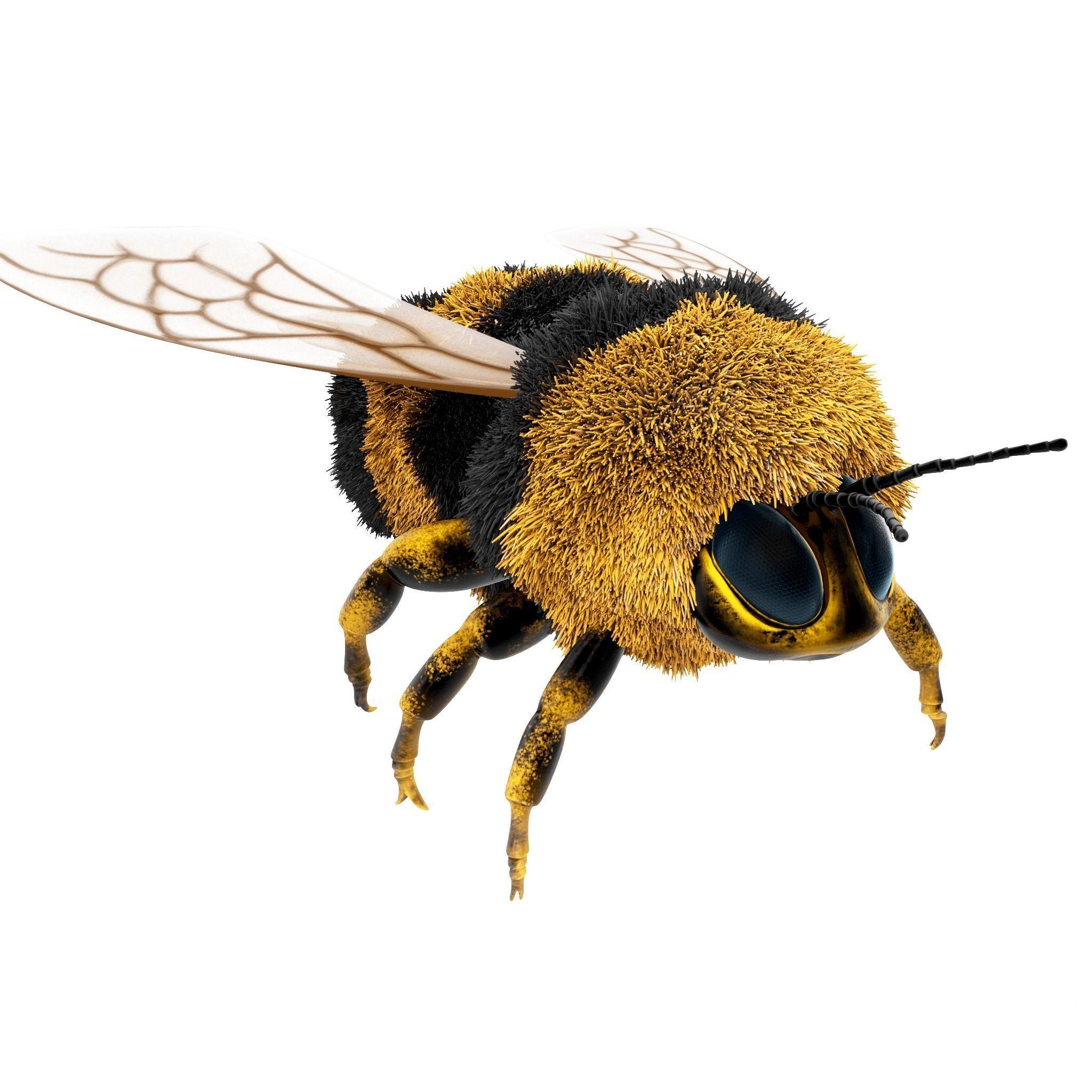 Bumblebee cartoon