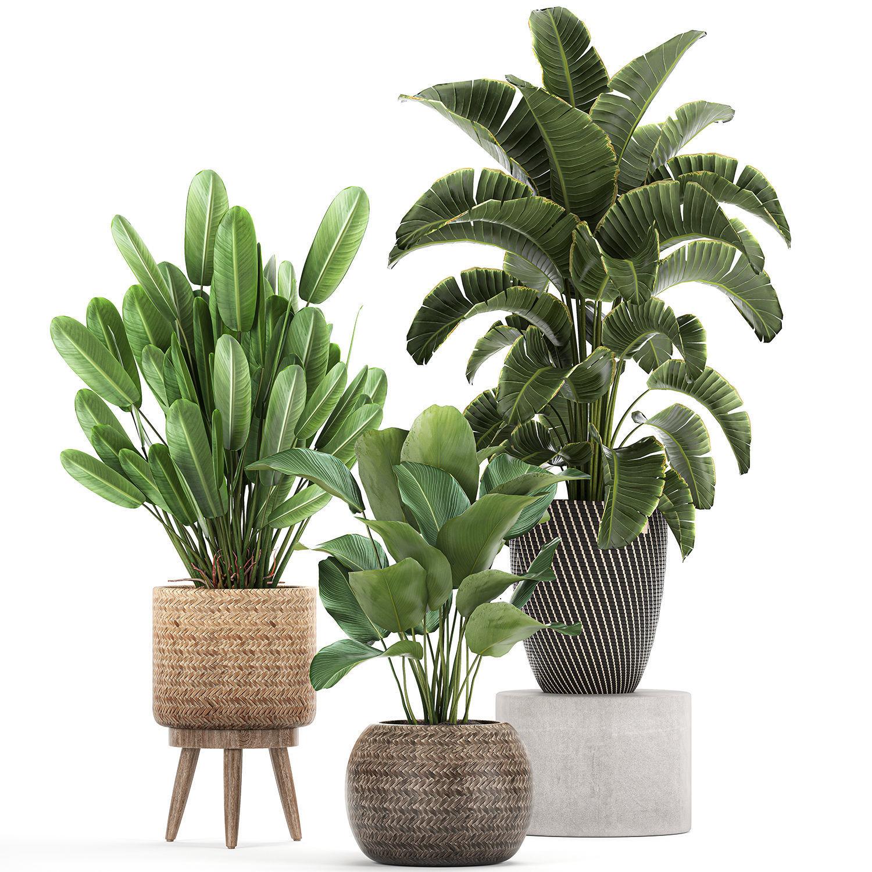 Ornamental plants in a rattan basket 779