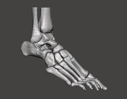 3D model Right Foot - male