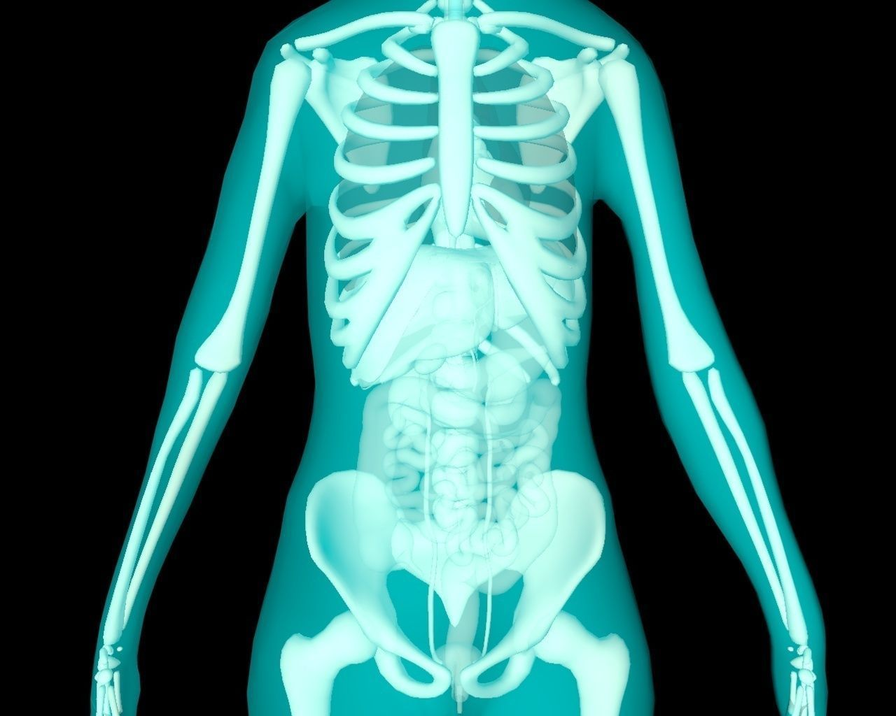 Xray Thorax and abdomen with internal organs