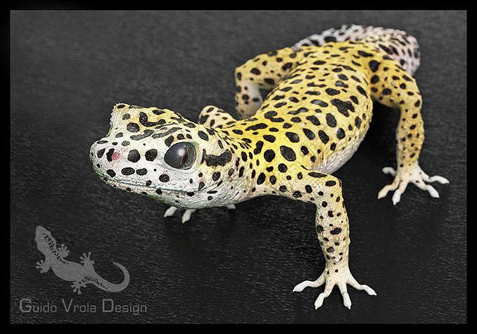 leopard gecko 3d model obj 3ds fbx blend mtl 1