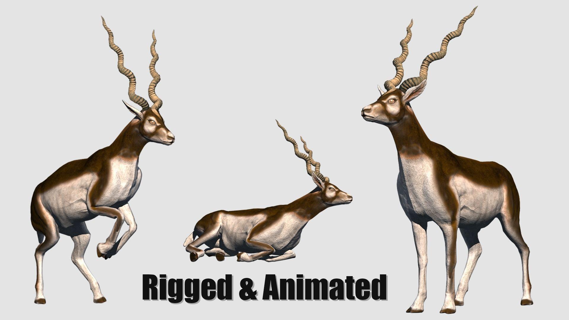 animated antelope