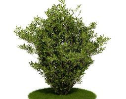 shrub bush and grass 3d model