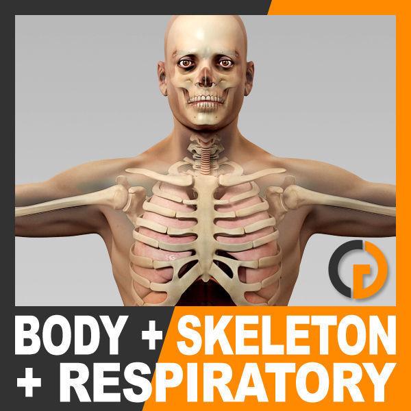 Human Male Body Respiratory System and Skeleton - Anatomy