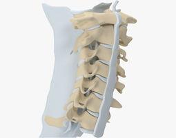 Cervical Spine 3D