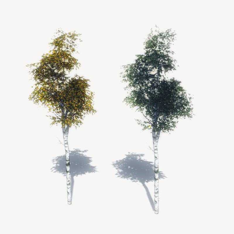 FREE Birch Trees Sample Model