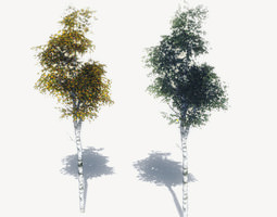 realtime free birch trees sample model 3d asset