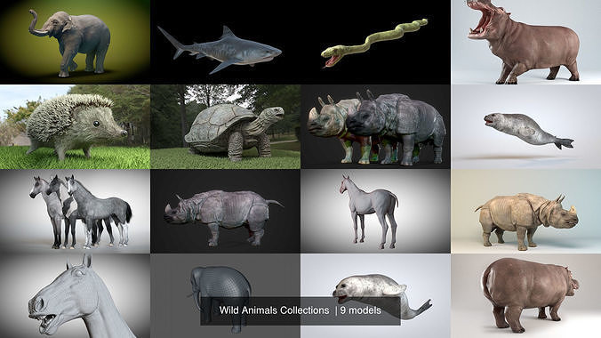 Wild Animals Collections