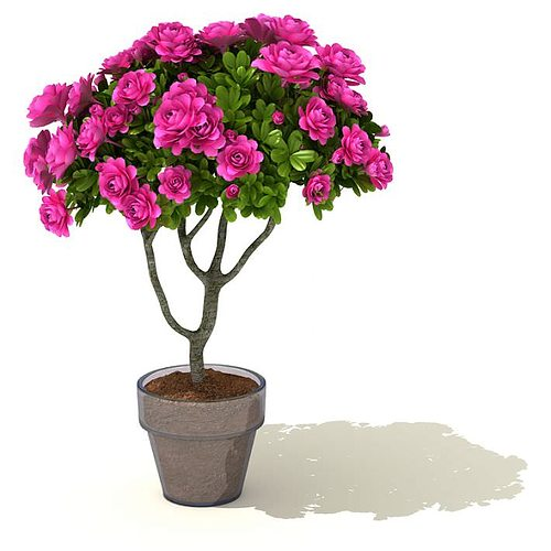 Pink 3d model flower pot plant cgtrader mightylinksfo