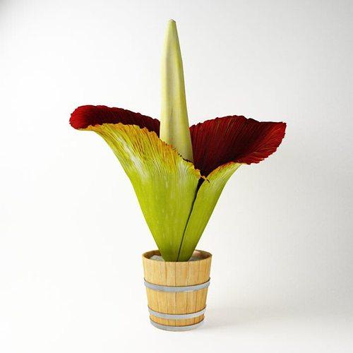 exotic flower in a pot 3d model obj mtl 1