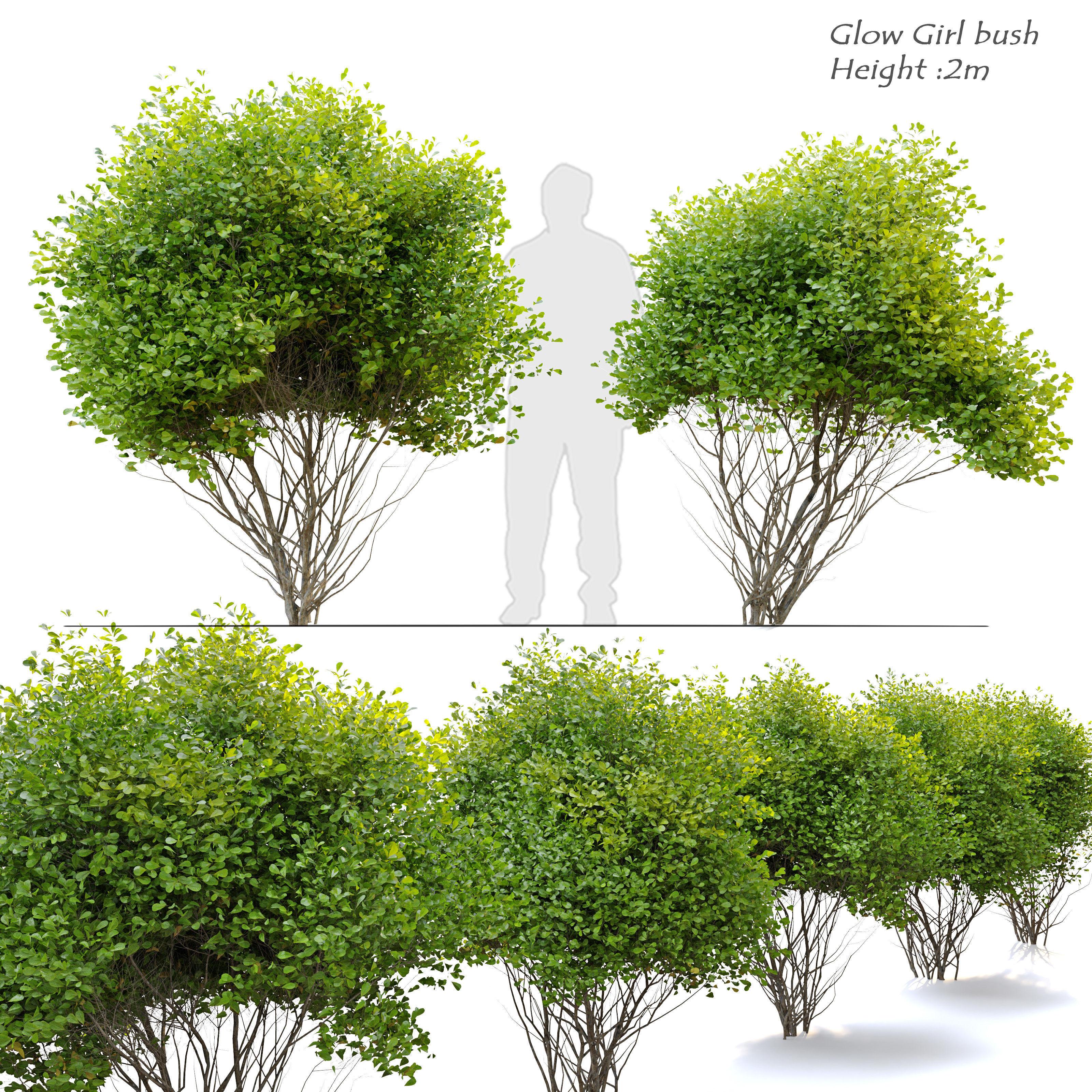 Glow girl bush