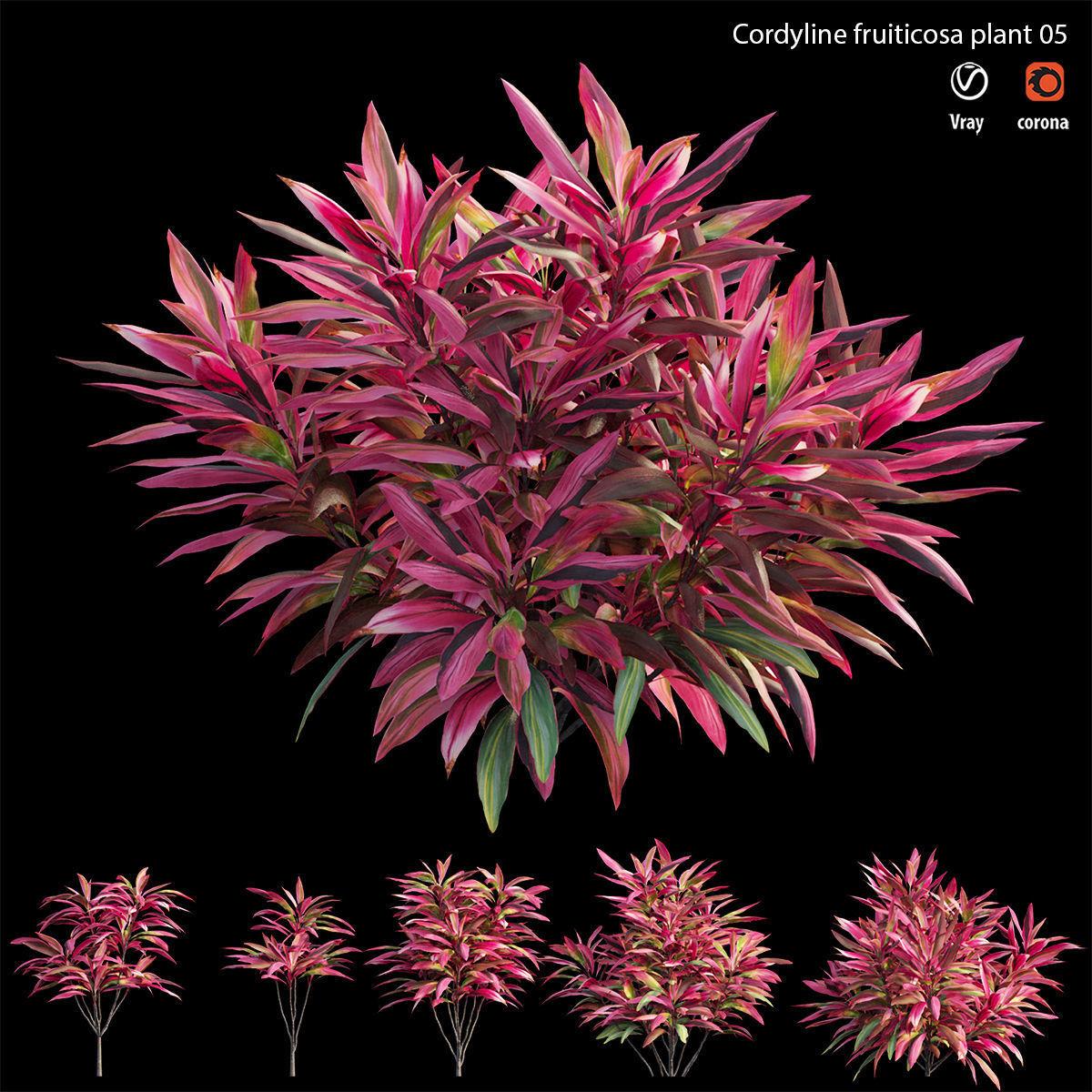 Cordyline fruticosa plant set 05