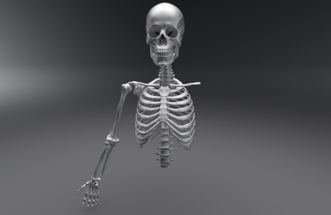 Upper Skeleton Articulated