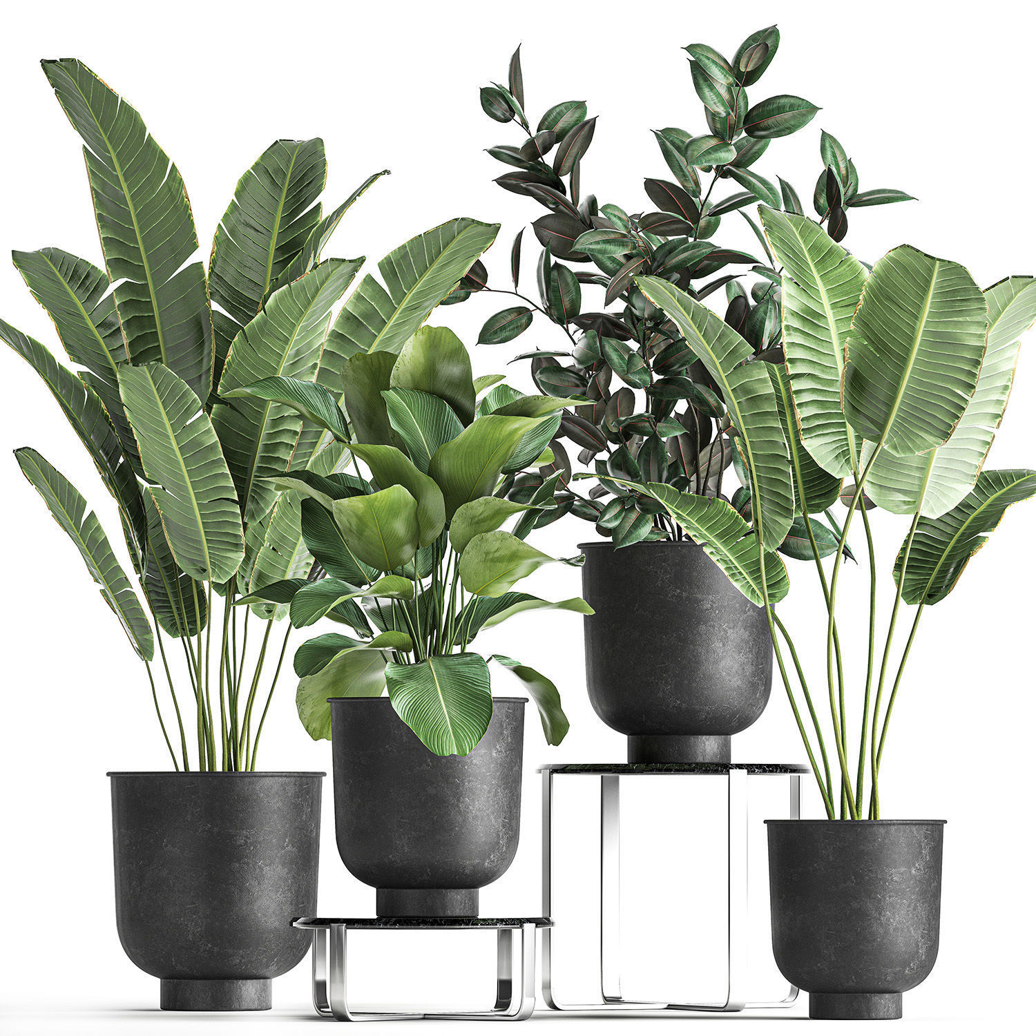 Houseplants in a pot for the interior 845