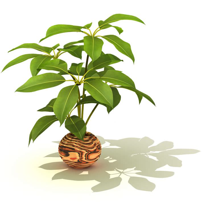 Potted Decorative Plant